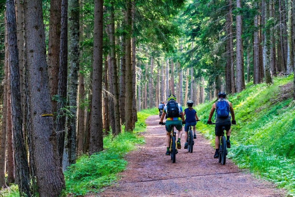 electric mountain bikes riding on forest trail